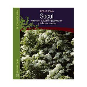 Socul: cultivare, utilizare in gastronomie şi în farmacia casei imagine