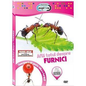 Află totul despre furnici imagine