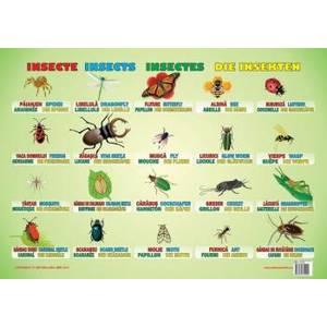 Insecte imagine