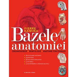 Bazele anatomiei imagine